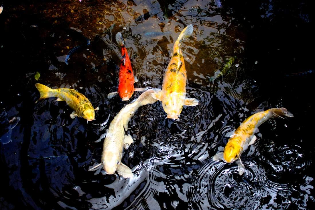 m_Posing Fish